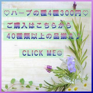 (71)全44種♪ ハーブの種 お好きな物 4種類 セット(その他)