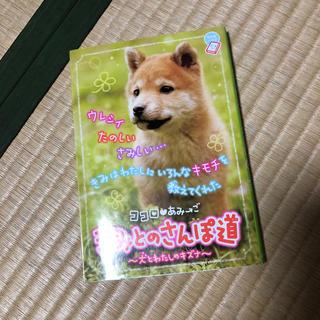 ショウガクカン(小学館)のきみとのさんぽ道 ココロ・あみ→ご 犬とわたしのキズナ きみが大スキ(その他)