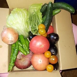 野菜  サイズ60(野菜)