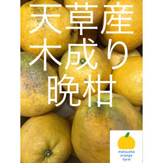 晩柑 家庭用 4.5kg (フルーツ)