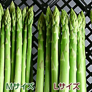 グリーンアスパラ 500g 新鮮野菜(野菜)