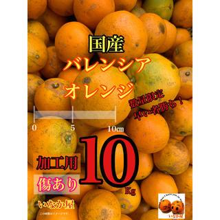 バレンシア オレンジ 国産 加工用 数量限定(フルーツ)