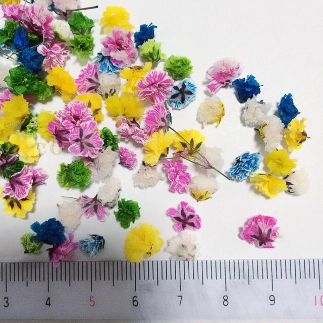 100粒かすみ草ドライフラワー ハンドメイドのフラワー/ガーデン(ドライフラワー)の商品写真