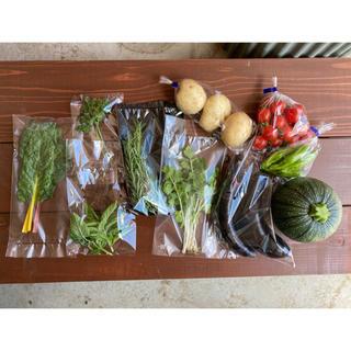 農薬、化成肥料、除草剤無使用野菜、お試し詰め合わせ(野菜)