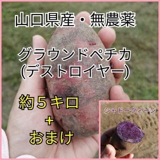 【おまけ付き】グランドペチカ(デストロイヤー) 約5kg(野菜)