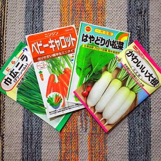 野菜の種 4種類  家庭菜園  プランター(野菜)