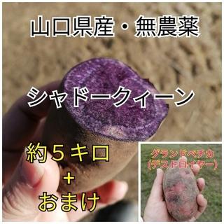 【おまけ付き】シャドークィーン 約5kg(野菜)