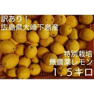 訳あり!広島県大崎下島産 特別栽培 無農薬レモン 1.5キロ(フルーツ)
