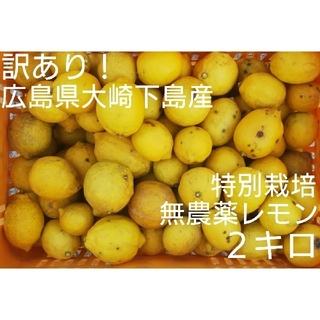訳あり!広島県大崎下島産 特別栽培 無農薬レモン 2キロ(フルーツ)