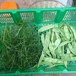 無農薬野菜 オカヒジキ100㌘+モロッコインゲン150㌘(野菜)