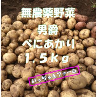 無農薬野菜 新ジャガ 男爵 べにあかり 1,5kg(野菜)