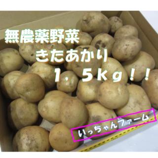 無農薬野菜 新ジャガイモ きたあかり 1,5kg (野菜)