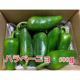 ハラペーニョ 500g(野菜)