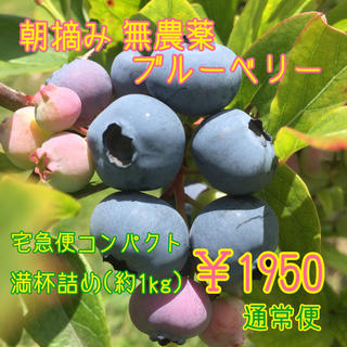 朝摘み ブルーベリー 無農薬(フルーツ)