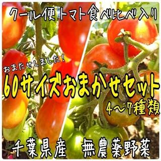 野菜おためし♪野菜おまかせ♪野菜箱詰め 60サイズ♪ 無農薬野菜(野菜)