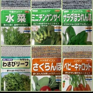 野菜の種 6種類+サンチュ30粒(野菜)