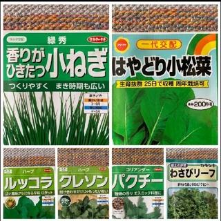 野菜の種 6種類  家庭菜園  プランター(野菜)