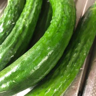 無農薬 有機肥料栽培 きゅうり  (野菜)