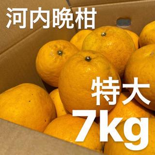 特大 宇和ゴールド 7Kg  河内晩柑 愛媛 みかん(フルーツ)
