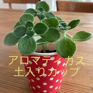 アロマティカス 土入りカップ(その他)