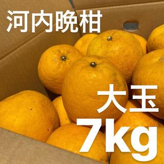 大玉 宇和ゴールド 7Kg  河内晩柑 愛媛 みかん(フルーツ)
