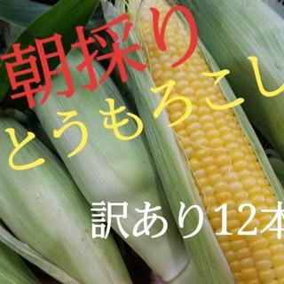 朝採りとうもろこし(野菜)