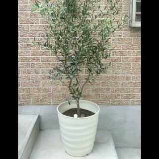 大型 植木鉢 プランター フレグラーポット 大和プラスチック 43型 観葉植物