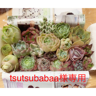 tsutsubabaa様専用  ミニ寄せ植えセット(その他)