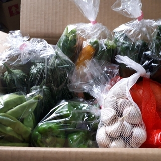 お任せ野菜詰め合わせセット80サイズ(野菜)