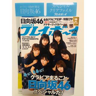 欅坂46(けやき坂46) - 日向坂 プレイボーイ クリアファイル付き