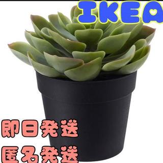 イケア(IKEA)のIKEA イケア FEJKA フェイカ 人工観葉植物, 室内/屋外用(その他)