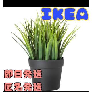 イケア(IKEA)のIKEA イケア FEJKA フェイカ 人工観葉植物, 室内/屋外用 グラス(その他)