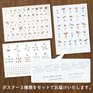 標本の昆虫ポスター】あいうえお表&アルファベット表&数字表の3枚 ...
