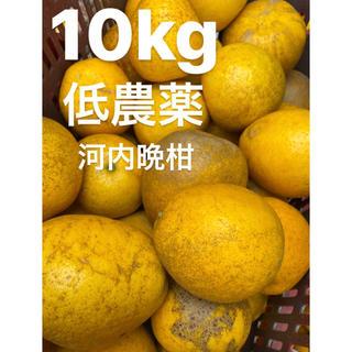愛媛 低農薬 宇和ゴールド10Kg   河内晩柑 みかん(フルーツ)