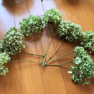 アジサイ紫陽花アナベルドライフラワー枝付き(ドライフラワー)
