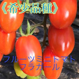 フルーツミニトマト フラガール 2キロ(野菜)