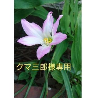 クマ三郎様専用 野菜の種(野菜)