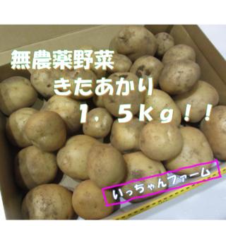 無農薬野菜 新ジャガ きたあかり 1,5kg 【7月4日収穫】(野菜)