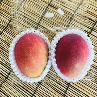 【沖縄県産 マンゴー】1パック(2玉)(フルーツ)