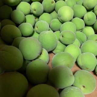 青梅 豊後梅 2L 約3キロ(フルーツ)