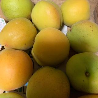 八助 梅 杏 約2キロ(フルーツ)