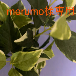 merumo様専用(洗剤/柔軟剤)