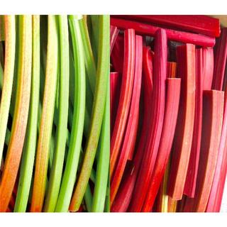 信州産 2色ルバーブ 1kg(野菜)
