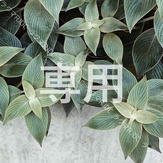 LANCOME - 【現品同量39,600円分】アプソリュ ホワイトオーラ エッセンス 幹細胞コスメ