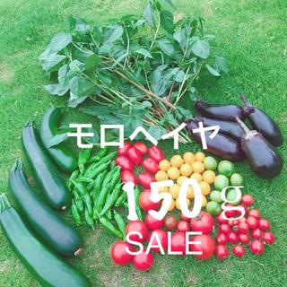 モロヘイヤ 特別価格(野菜)