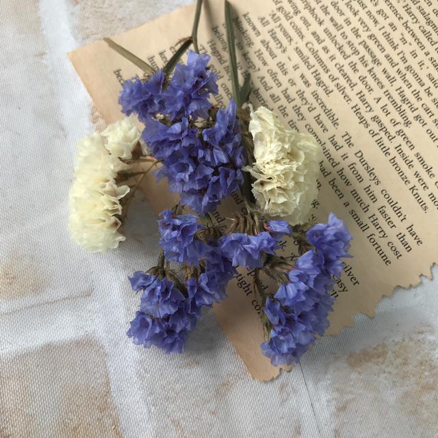 夏色 スカイブルー&ホワイト スターチス 小分け ドライフラワー ハンドメイドのフラワー/ガーデン(ドライフラワー)の商品写真