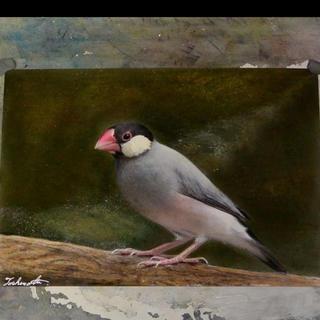 パステル色鉛筆画 さくら文鳥 A4