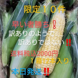 🌽朝採り新鮮発送🌽トウモロコシ🌽(野菜)