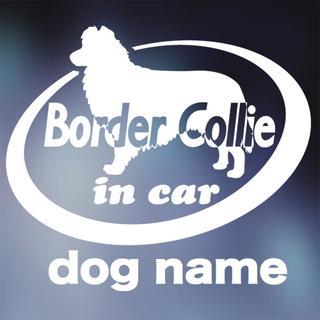ボーダーコリー in carステッカー、犬ステッカー(犬)