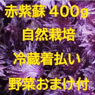 赤紫蘇400g 野菜のオマケ付き 自然栽培(野菜)